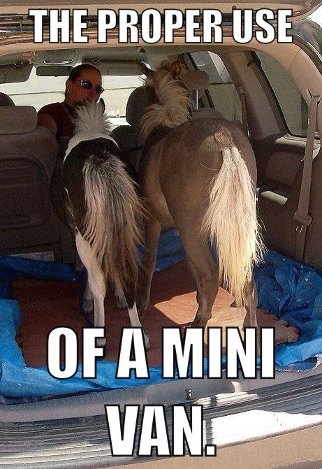 I actually went to one of my horse shows.... And a lady pulls up in a mini van with 3 mini ponies in it! Shavings and all!!