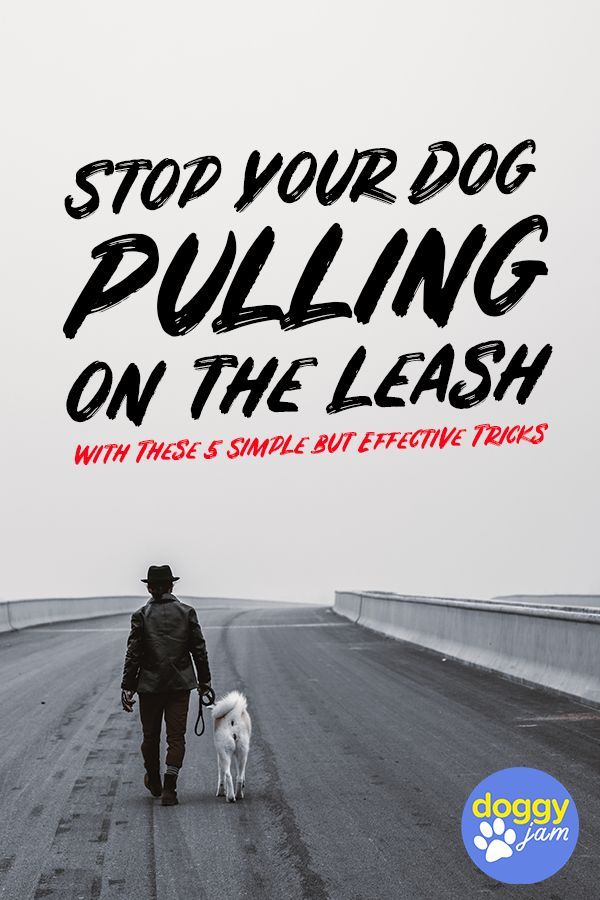 Stop Your Dog Pulling On Leash With These 5 Simple But Effective