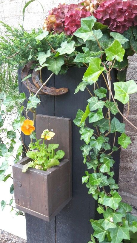 100cm Lautatarha pihalaatikko 30 leveänä ja seinälaatikko. Muratti, havut ja hortensiaa. Hyvä yhdistelmä ja tuntuvat viihtyvän.