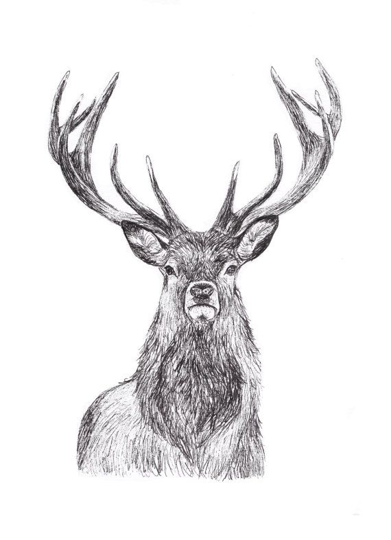 24+ Free Deer Drawings Designs Free Premium Templates masterlist