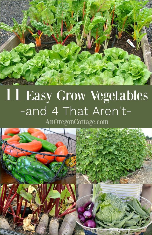 11 Truly Easy Grow Vegetables 4 That Really Aren T With Images
