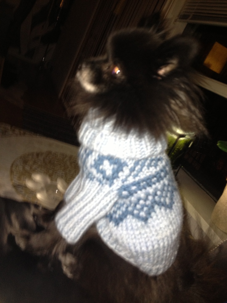 Dogsweater in Marius Pattern, knitted in Sandnes Alfa wool.