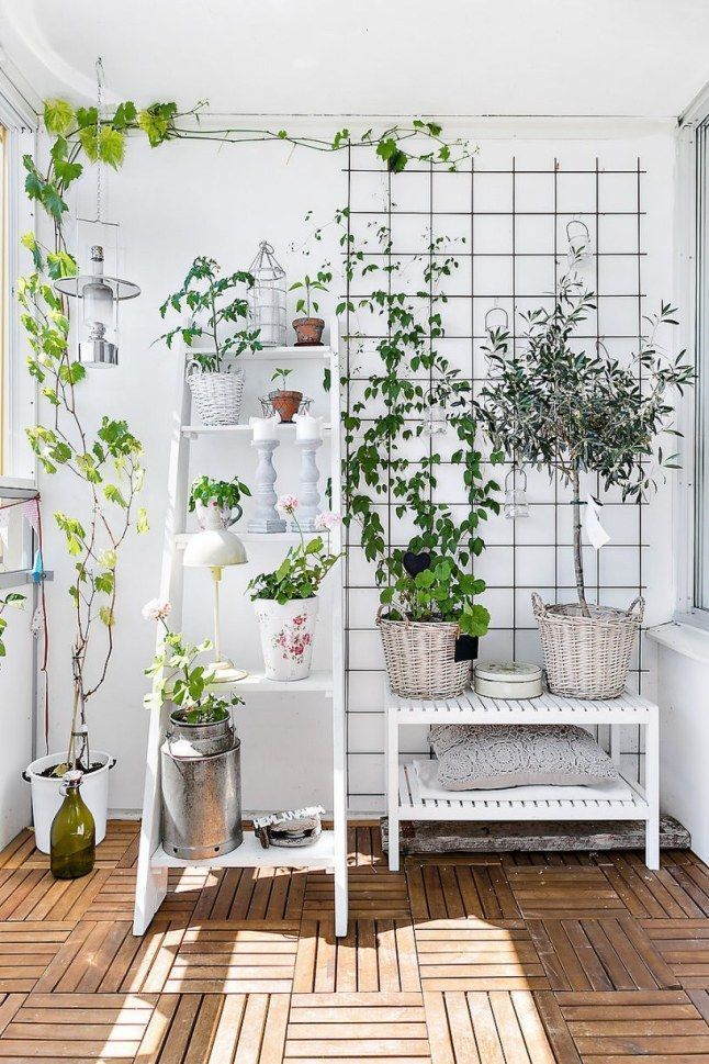 How To Build A Closed Balcony Indoor Vines Balcony Plants