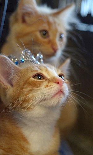 Be my prince..! #cat