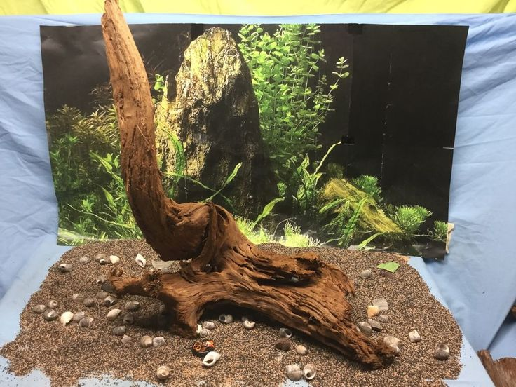 Best 25 aquarium driftwood ideas on pinterest aquarium for Fish tank driftwood