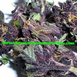 Purple Haze Buy Marijuana Online,Weed for sale,Buy Cannabis Online,Buy Moonrock,Buy Wax,Shatter,Buy Edibles