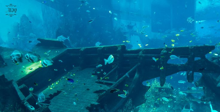 Belitung Shipwreck Exhibition by Ayan Sen www.belitungindonesia.com