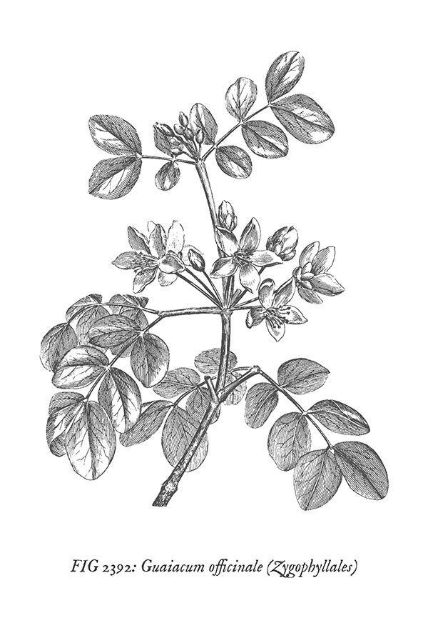 Free Vintage Botanical Prints Wall Art Vintage Botanical Prints Etsy Art Prints Botanical Prints