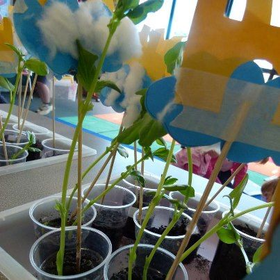 Jack and the Beanstalk Lessons. Make your own beanstalk. Add skewers and plant beans. Add precut castles and clouds. Watch it grow!