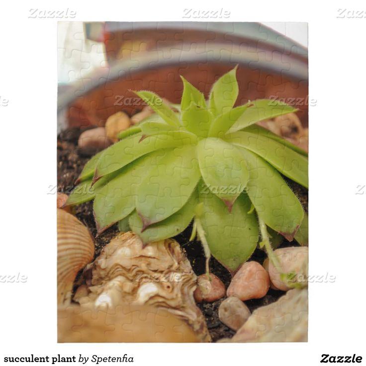 succulent plant puzzle