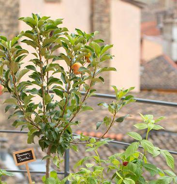 Les 25 meilleures id es de la cat gorie arbres fruitiers - Arbres nains pour terrasses ...