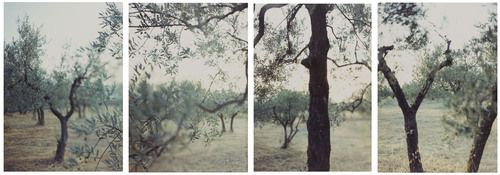 JoAnn Verburg. Olive Trees after the Heat. 1998