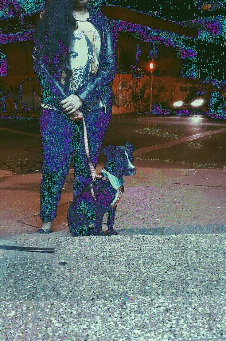 Pixel life.  #glitch #dog #glitchart #art #graphic #design #photo #photography #indie