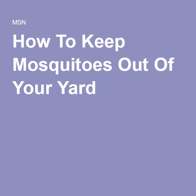lawn forward how to keep mosquitoes out of your yard how to get rid