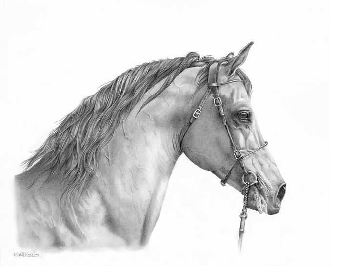 Magnificence Drawing