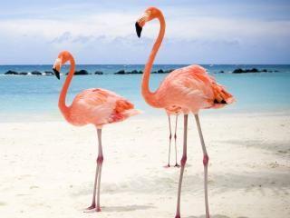 Фламинго - обои на рабочий стол 1277x1173