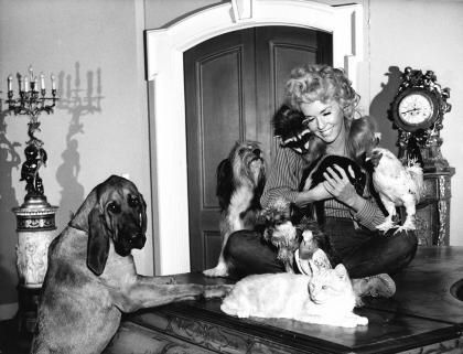 """The Louisiana-born Donna Douglas, who won fame as Elly May Clampett on the long-running hit TV series, """"The Beverly Hillbillies,"""" died Thursday, at the age of 81. Description from pinterest.com. I searched for this on bing.com/images"""
