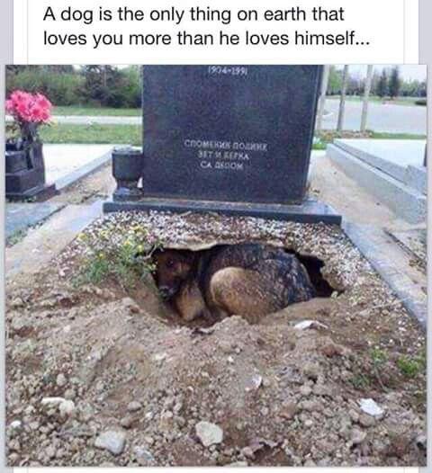 Aww, heartbreaking