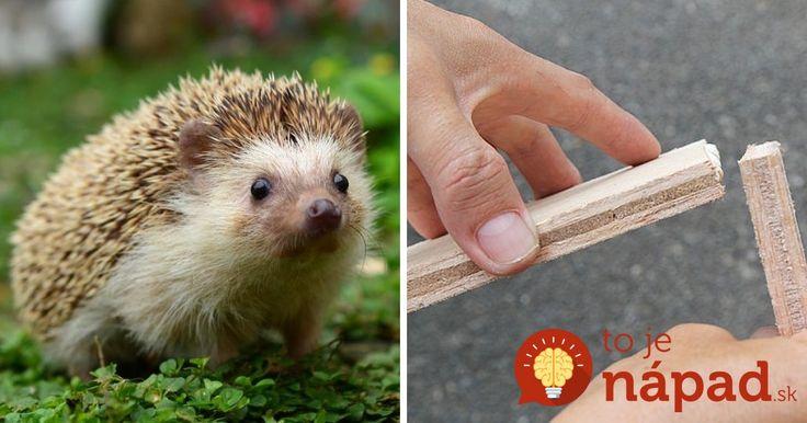 Vyrobte jednoduchý zimný príbytok pre ježka: V záhrade je užitočnejší, ako si myslíte!