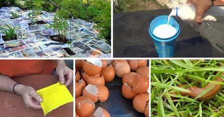 Pesticidas, abonos y herbicidas caseros ecológicos para plantas