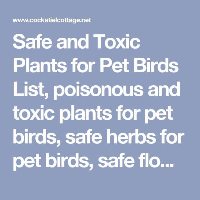 Safe and Toxic Plants for Pet Birds List, poisonous and toxic plants for pet birds, safe herbs for pet birds, safe flowers for pet birds, safe garden plants for pet birds, safe garden flowers for pet birds, safe seeds to grow for pet birds, safe houseplants for pet birds, safe house plants for pet birds, Safe and Toxic Poisonous Woods, Toxic Plant List, Safe Plants List, Safe Woods for Bird Perches, Safe Trees and safe wood to use for bird perches and toys, Poisonous Plants for Birds, Safe…