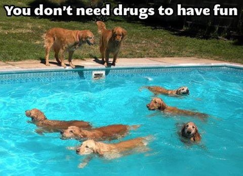 Happy Swimming Dogs I Can 39 T Wait To Have A Pool Someday Animals Pinterest Dog And Animal