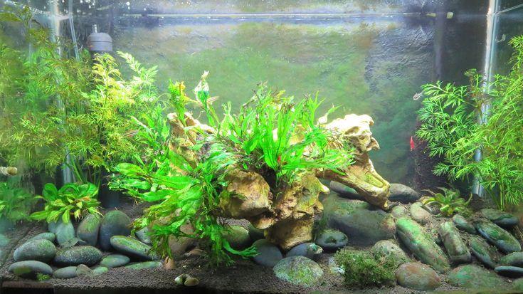 How to Fight Algae Overgrowth in Your Aquarium