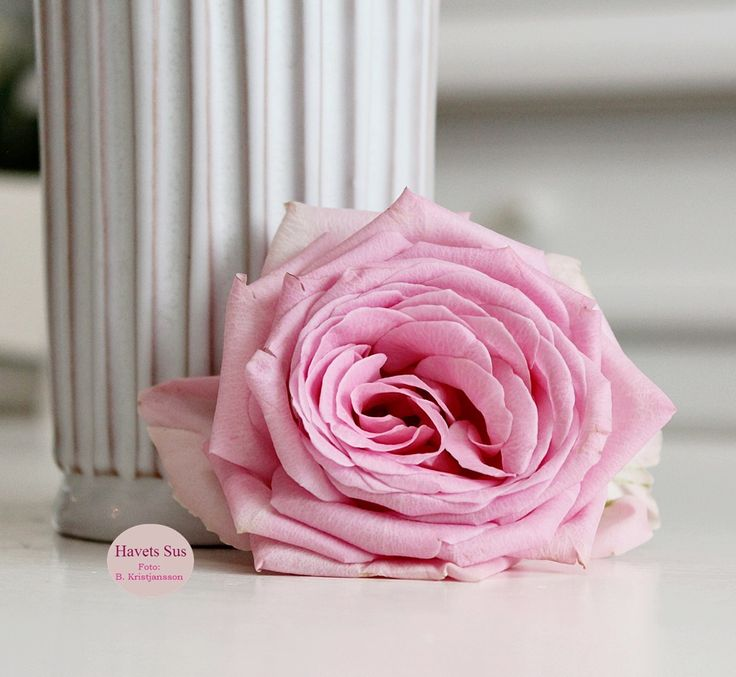 Eslau - Eslau vase - Retro - Havetssus - rose - roser - blomster - flowers - flower