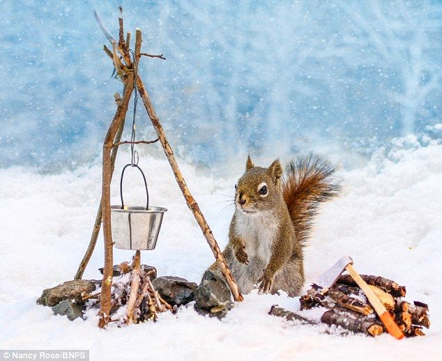 LOVE THIS:  Wild squirrel poses for charming photos after UK photographer hides food in miniture props.  Click on photo to read the article and see more photos.