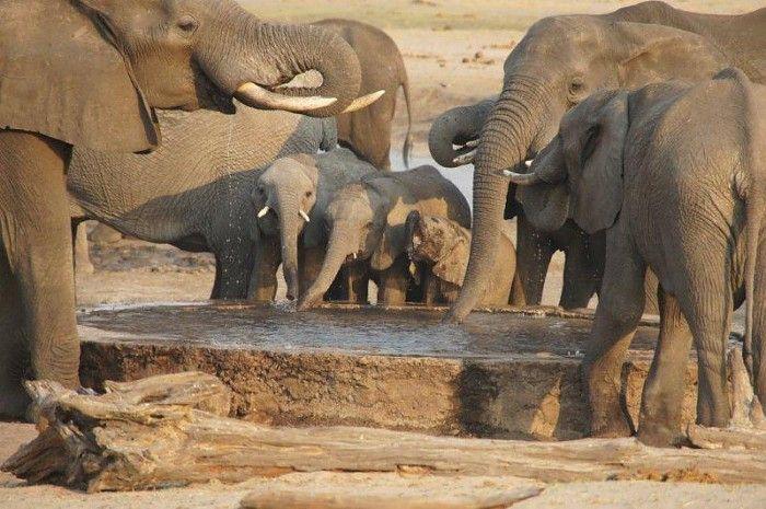 Dry season safari in Zimbabwe
