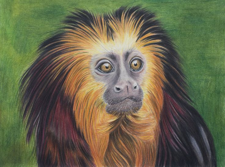 Golden lion tamarin by *Sarahharas07 on deviantART: God Creature, Animales Portraits, Animal Fantasy, Animal Portraits