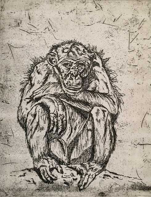 """Chimp Elder"", an orginal intaglio etching (zinc plate, copper sulphate etch)"