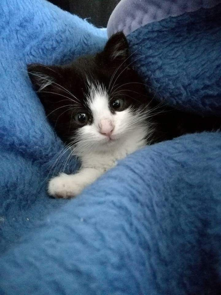 Pin By R2 On Cats Baby Love Baby Cats Cute Cats Cute Baby Animals