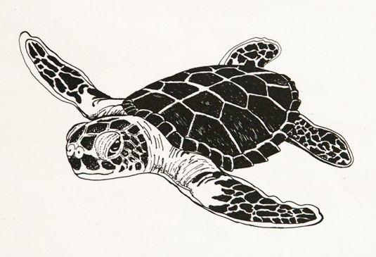 Sea turtle drawing - photo#4