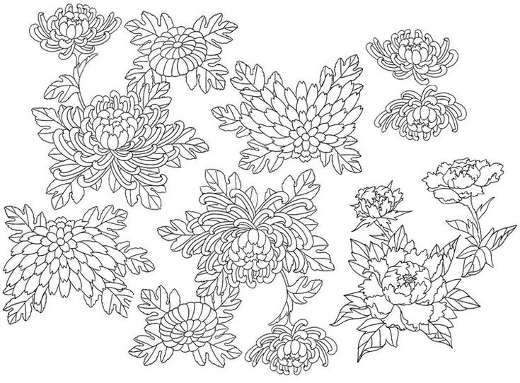 Adult Coloring Page Japan Flowers 2