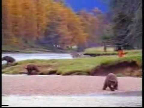 Grizzly Man Timothy Treadwell - Their's Salmon and there's ...