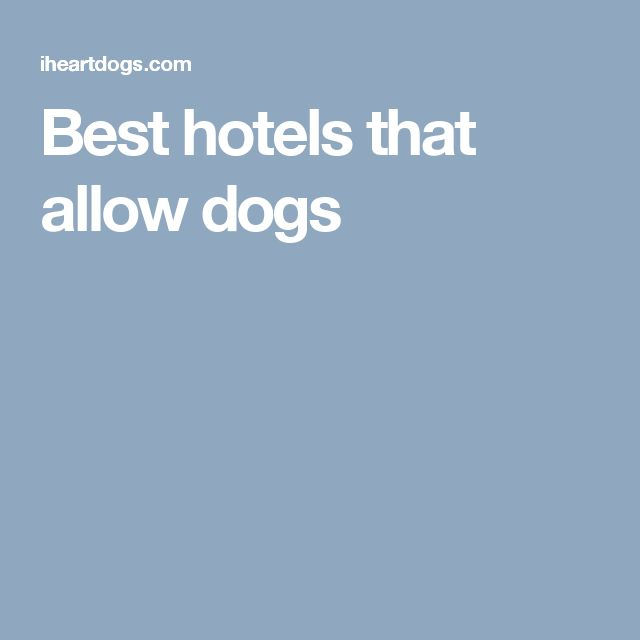 Best Hotels That Allow Dogs