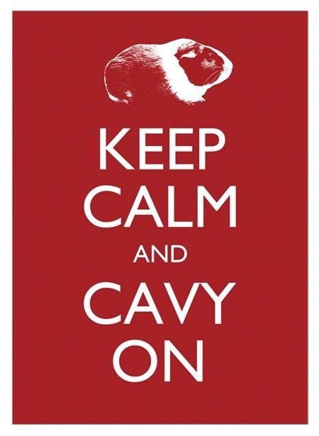 cavy = guinea pig: Keepcalm Guineapig, Guinea Piggies, Animals, Guineapigs, Cables, Pig Poster, Keep Calm, Guinea Pigs