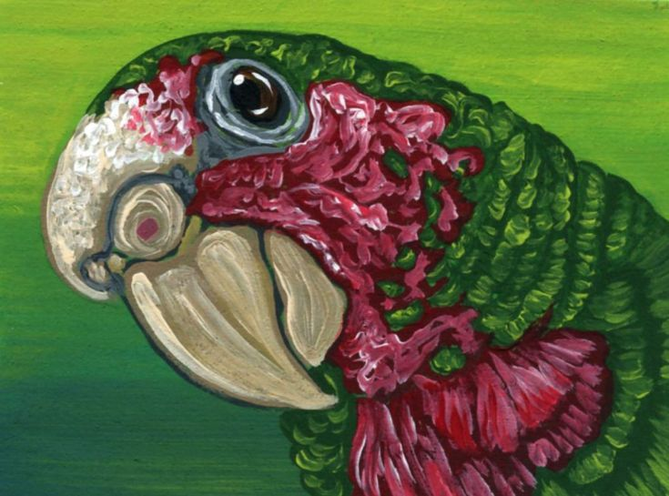 Buy ACEO ATC Original Parrot Cuban Amazon Bird Art-Carla Smale, Gouache painting by carla smale on Artfinder. Discover thousands of other original paintings, prints, sculptures and photography from independent artists.