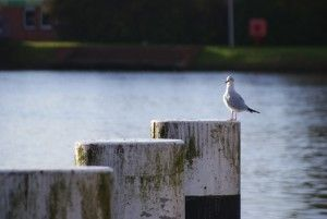 Ruhiges Leben in #Emden