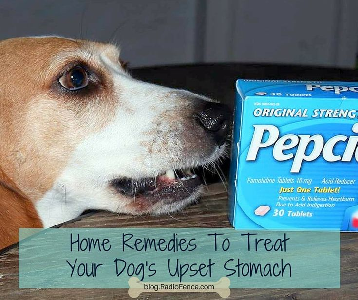 Home Remedies To Treat Your Dog's Upset Stomach. Treat Dog