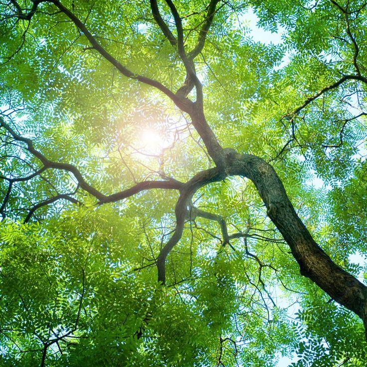 Çünkü ahşap;   ·      Doğal ·      Çevreci ·      Geri dönüşümlü ·      Korunabilir ·      Sağlıklı ·      Sürdürülebilir ·      İnsan varolduğundan beri varolandır