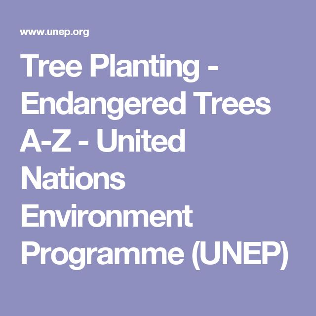 Tree Planting - Endangered Trees A-Z - United Nations Environment Programme (UNEP)