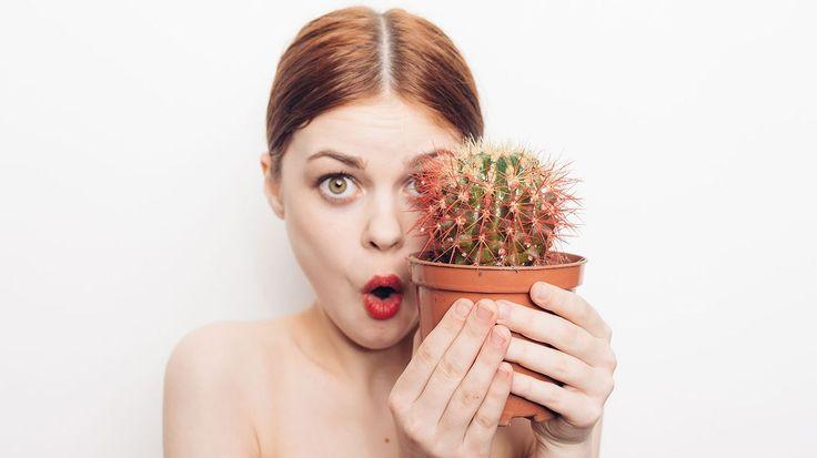 Kaktusy v zimě: při správné péči následně krásně pokvetou! - Hobby