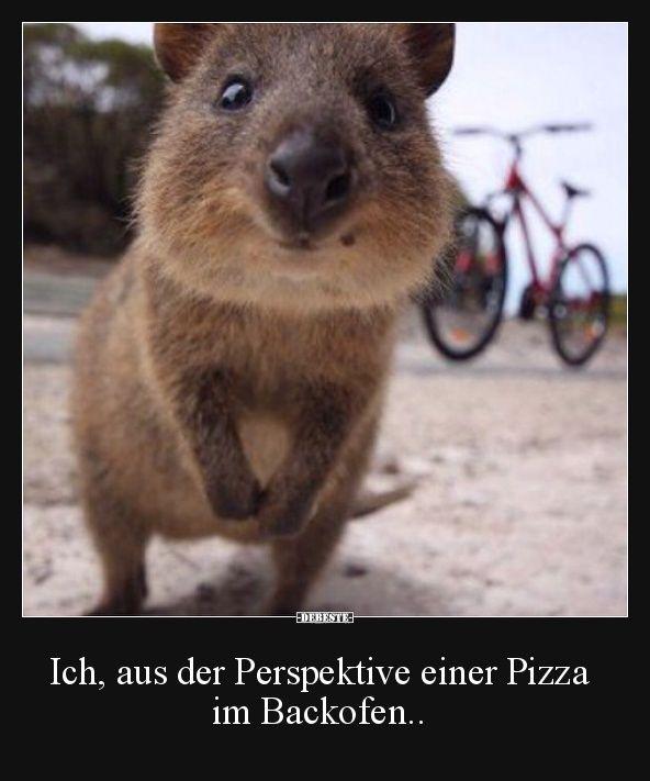 Ich, aus der Perspektive einer Pizza im Backofen..   Lustige Bilder, Sprüche, Witze, echt lustig