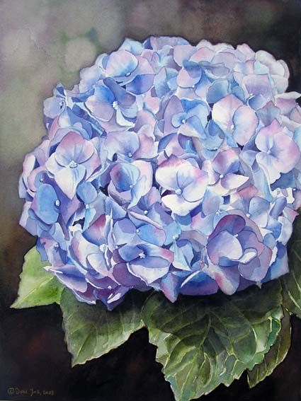 Blue Hydrangea - Flower watercolor painting by Doris Joa - Original Aquarellgemälde, blaue Hortensie