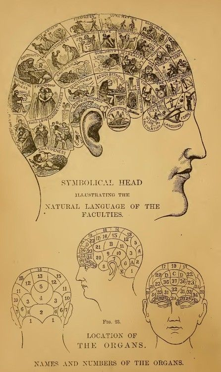'Symbolical head illustrating the natural language of the faculties': A symbolic diagram showing the brain divided up for phrenological purposes.
