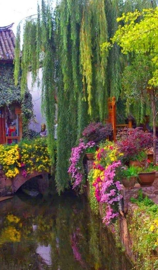 Weeping Willow Bridge in Yunnan Looks to pretty to be real....