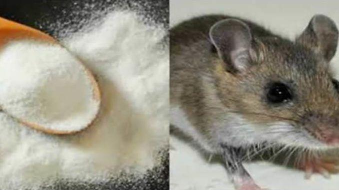 Como Acabar Con Las Ratas En El Jardin Pin En Cancer De Estomago