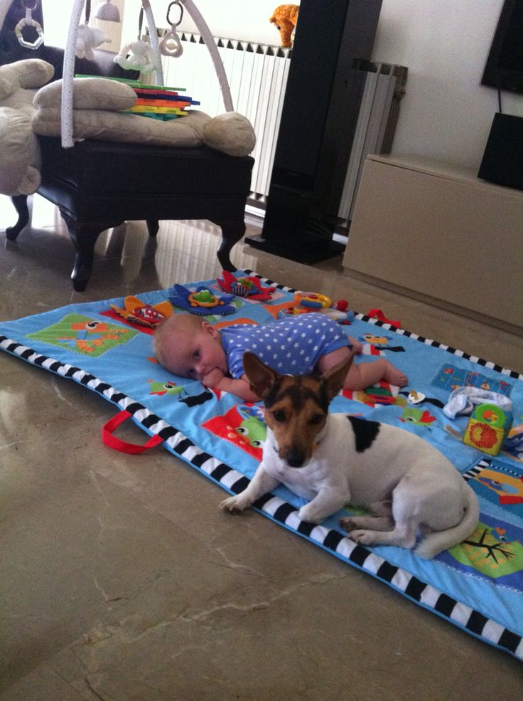 Jack russel and baby